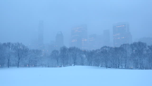 central park winter blizzard - sheep meadow central park stock videos and b-roll footage