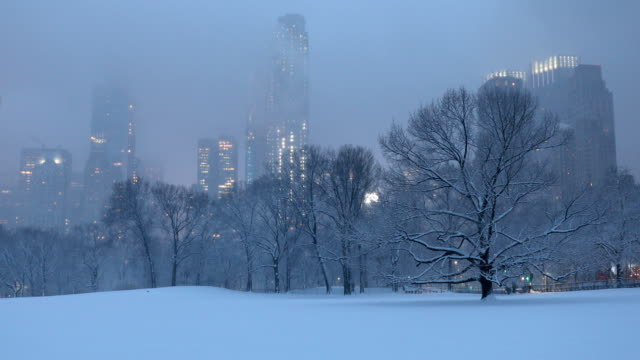 central park winter blizzard - bare tree stock videos & royalty-free footage