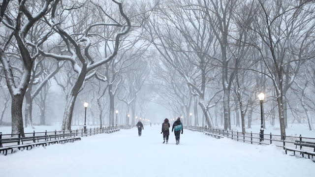 central park winter snowfall in new york city - central park manhattan stock videos and b-roll footage