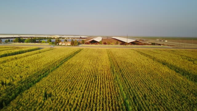 central valley farmland - aerial shot - farm stock videos & royalty-free footage