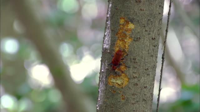 cerambycidae carving tree trunk - skadedjur bildbanksvideor och videomaterial från bakom kulisserna