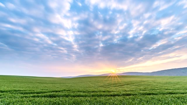 cereal field in spring at sunrise, miltenberg, franconia, bavaria, germany - standbildaufnahme stock-videos und b-roll-filmmaterial