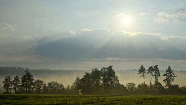 Cereal field with forest at sunrise with morning mist, Vielbrunn, Michelstadt, Odenwald, Hesse, Germany