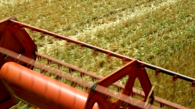 cereal harvest - grain cart stock videos & royalty-free footage