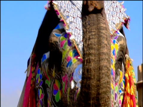 Ceremonial and decorated elephants with mounted mahouts lift trunks to trumpet Jaipur.
