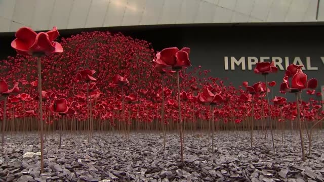 stockvideo's en b-roll-footage met cermaic poppies go on display for the final time in manchester uk manchester imperial war museum north ceramic poppies on display as part of 'wave'... - imperial war museum museum
