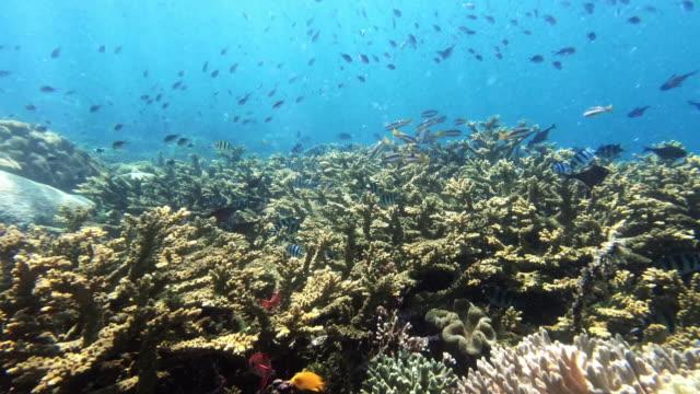 vídeos de stock, filmes e b-roll de certa vida marinha só se destaca do resto - fundo do mar