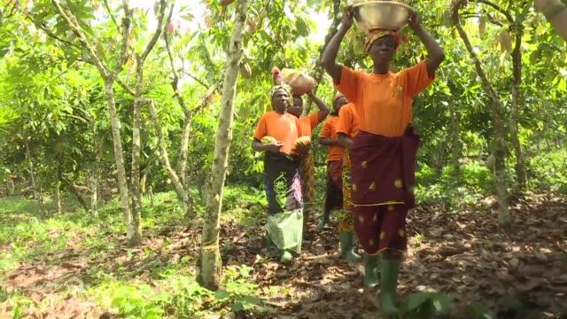 certified fair trade the production of certified cocoa is rapidly developing in ivory coast the world's leading producer of cocoa often blacklisted... - côte d'ivoire stock videos & royalty-free footage