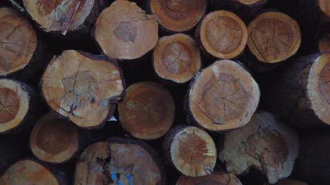 certified wood scots pine (pinus sylvestris), vinuesa, soria, castilla y leon, spain, europe - log stock videos & royalty-free footage