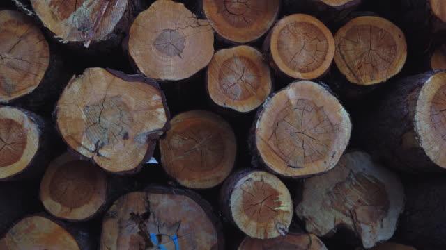 stockvideo's en b-roll-footage met certified wood scots pine (pinus sylvestris), vinuesa, soria, castilla y leon, spain, europe - boomstam