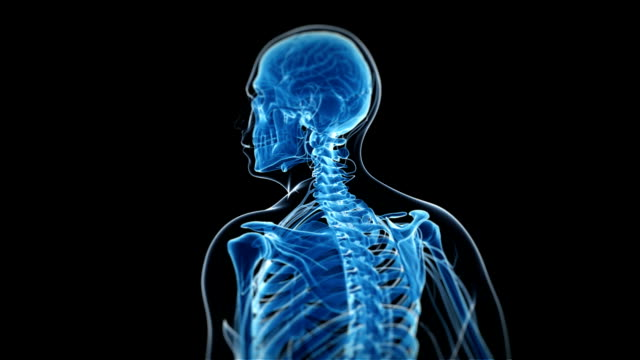 cervical spine - human neck stock videos & royalty-free footage