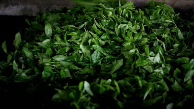 ceylon tea factory - dried tea leaves stock videos & royalty-free footage