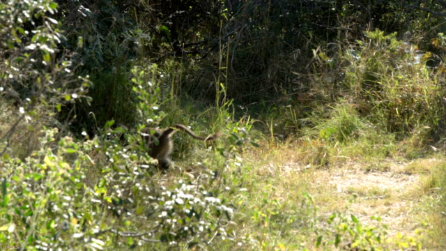 chacma ヒヒ エトーシャ国立公園 - 野生生物保護点の映像素材/bロール