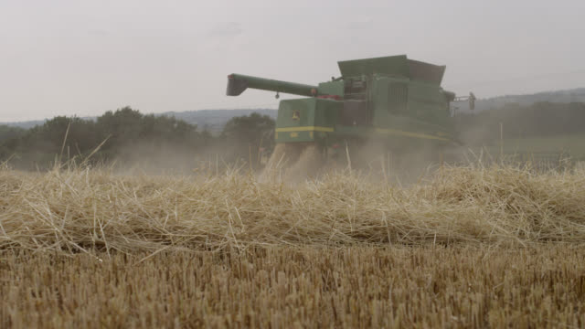 Chaff and dust from combine harvester in wheat (Triticum aestivum) field, Somerset, England