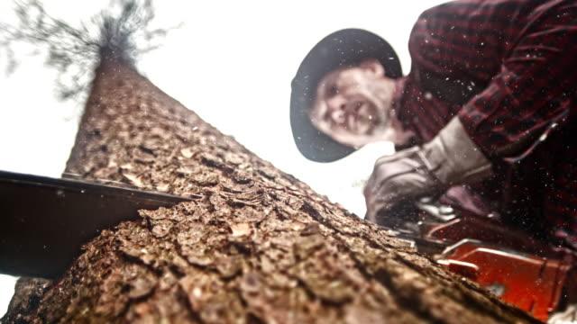 SLO MO motorsåg skär djupt in i ett träd