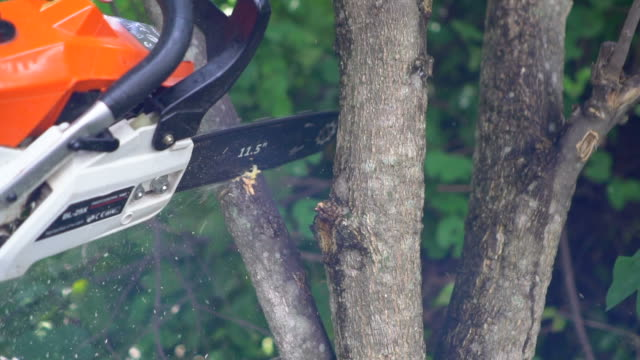 chainsaw cutting into a tree : slow motion - branch plant part stock videos & royalty-free footage