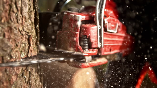 slo mo ds chainsaw cutting into a tree - sawing stock videos & royalty-free footage