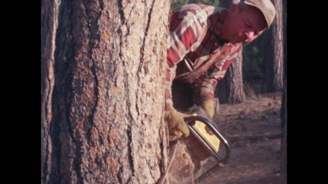 chainsaw cutting into ponderosa pine - lumberjack stock videos & royalty-free footage