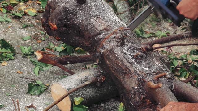 vídeos de stock, filmes e b-roll de serra de cadeia de a árvore - tronco termo anatômico