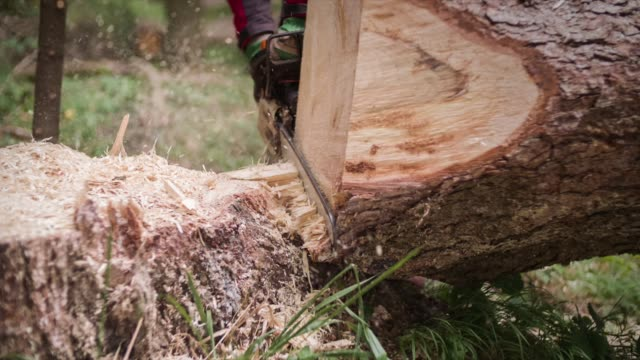 chainsaw cutting tree in slow motion - lumberjack stock videos & royalty-free footage