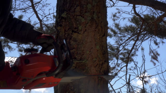chainsaw , lumberjack - fallen tree stock videos and b-roll footage