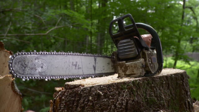 stockvideo's en b-roll-footage met ms chainsaw resting atop tree stump, stowe, vermont, usa - boomstronk