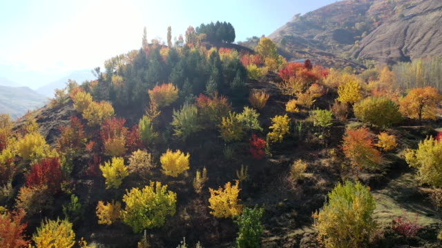 chalet among the autumn trees. - autumn leaf color stock videos & royalty-free footage