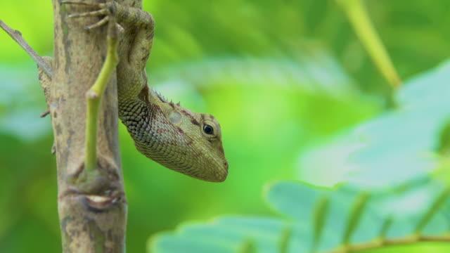4K Chameleon animal on tree