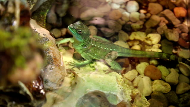 chameleon on tree - reptile stock videos & royalty-free footage