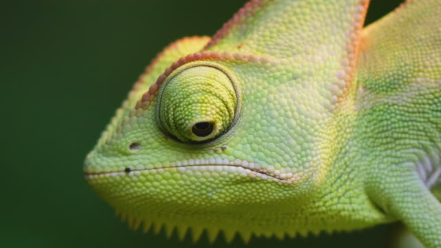 chameleon - animal eye stock videos & royalty-free footage