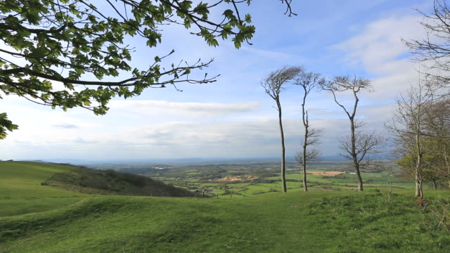 chanctonbury ring, a prehistoric hill fort on chanctonbury hill, south downs, west sussex, england - サウスダウンズ点の映像素材/bロール