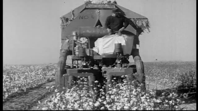 changes in cotton harvesting have eliminated many farm jobs and wages have remained stagnant / machines and workers harvesting and processing cotton... - lavoratore emigrante video stock e b–roll