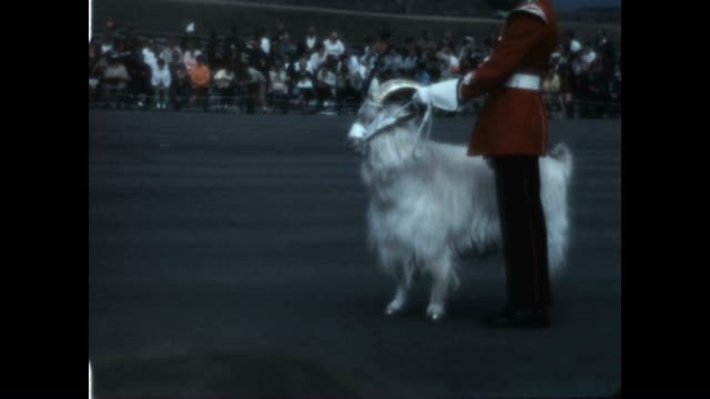 vídeos de stock e filmes b-roll de changing of the guard at the citadelle of quebec in the late 1960's featuring the regimental goat with its golden fleece. - maça