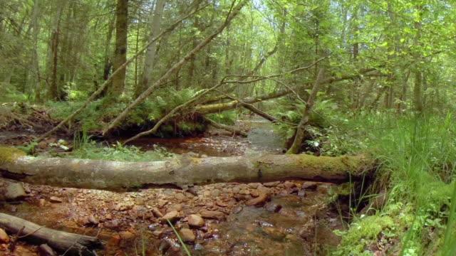 changing seasons - spring forest - シュバルツバルト点の映像素材/bロール