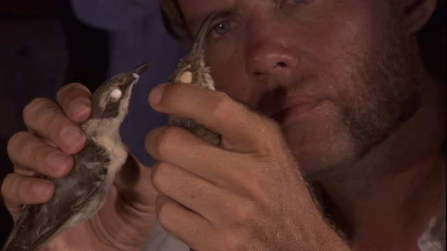 charles darwin examines dead mockingbirds. available in hd. - チャールズ・ダーウィン点の映像素材/bロール