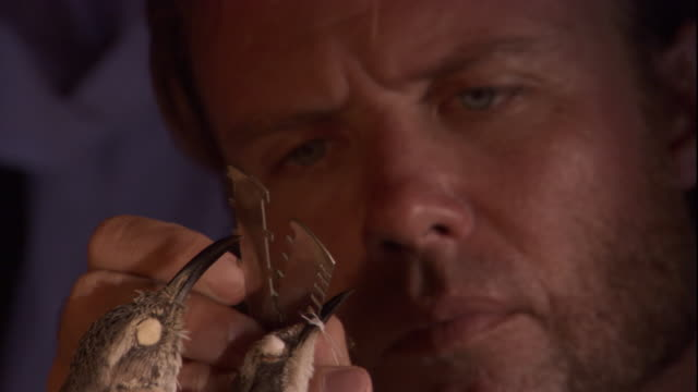 charles darwin examines dead mockingbirds, then makes notes in a red notebook. available in hd. - チャールズ・ダーウィン点の映像素材/bロール