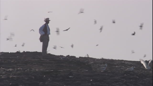 Charles Darwin watches petrels flying over a lava field. Available in HD.