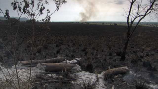 Charred and burnt aftermath of wild fire on savannah, Uganda