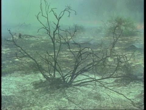 mcu charred remains of bushfire, australia - 1981 stock-videos und b-roll-filmmaterial
