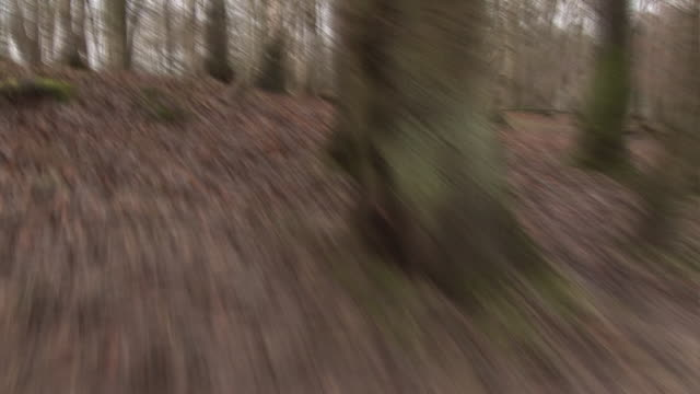 Chased through empty eerie Forest through the trees - Running
