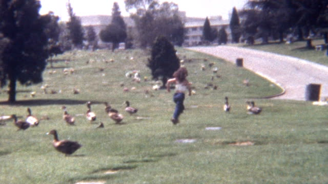 chasing ducks 1960's - goose stock videos & royalty-free footage