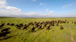 Chasing the herd across the plain