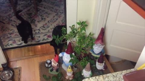 vídeos de stock, filmes e b-roll de check out leapfrog the cat as she decides to jump over a gnome. so cool! - jogo de carniça