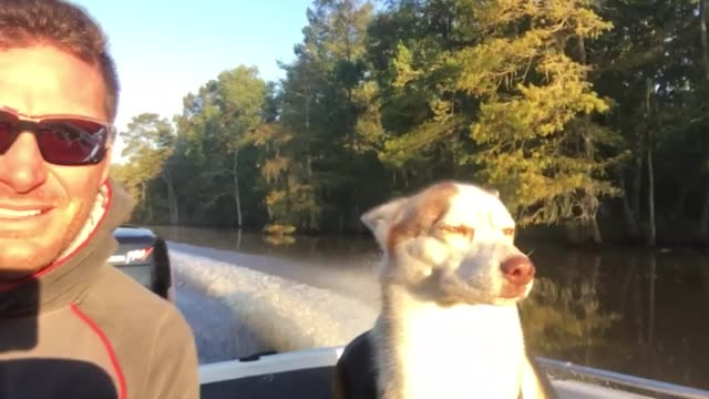 check out this dude's sleepy copilot helping him locate some big fish too funny - pilot fish stock videos & royalty-free footage