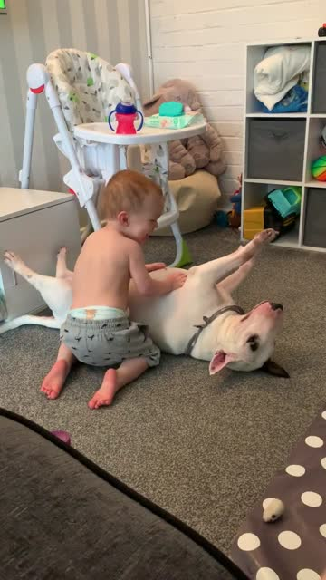 stockvideo's en b-roll-footage met check out this precious interaction between a baby boy and his doggy. cuteness overload! - genomen met mobiel apparaat