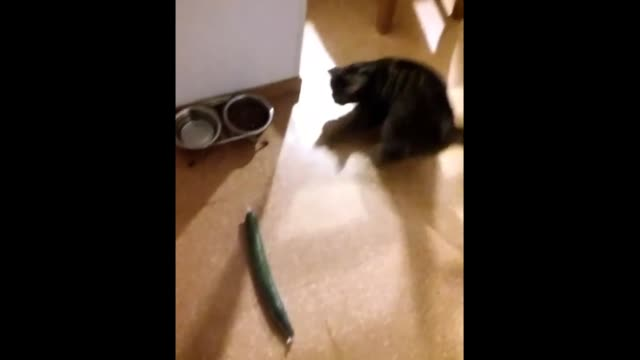 check out what happens when a cucumber sneaks up behind this cat while it's eating. what a devious veggie! - cucumber stock videos & royalty-free footage