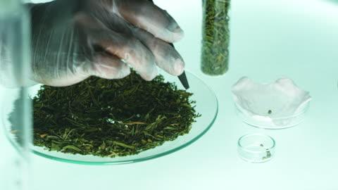 checking medical marijuana. laboratory tests - marijuana herbal cannabis stock videos & royalty-free footage