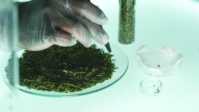vidéos et rushes de vérification de la marijuana médicale. tests en laboratoire - expérience scientifique