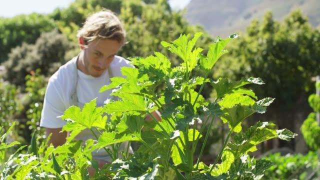 vidéos et rushes de vérification de ses plantes - environmental conservation