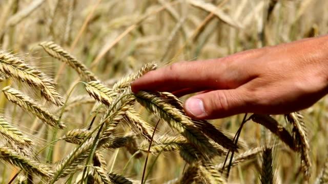 Überprüfung Weizen